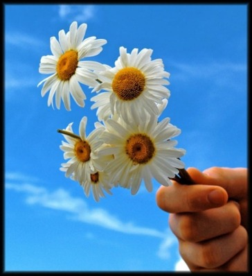 beautiful-flower-photography-03_thumb[2]