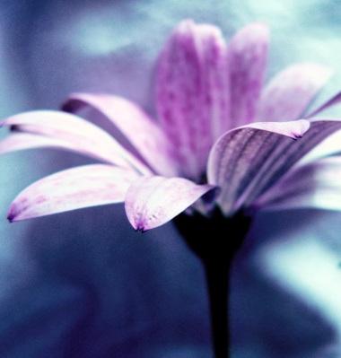 flower_by_metaledz